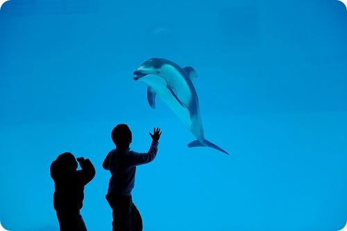 Дельфины достойны прав человека