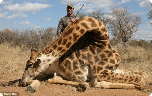 Охотники на жирафов: неоправданная жестокость