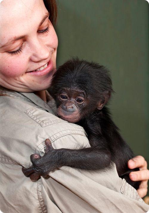 Бонобо из Атерстона