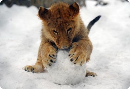 Зимние забавы в зоопарке Белграда