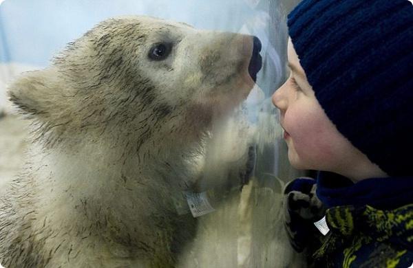 Посетители зоопарка Торонто знакомятся с новым полярным медвежонком