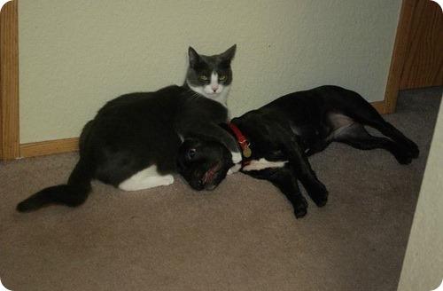 Как кошка с собакой -27