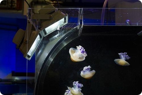 Медузы из Базеля