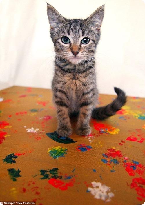 Кошачья благотворительность