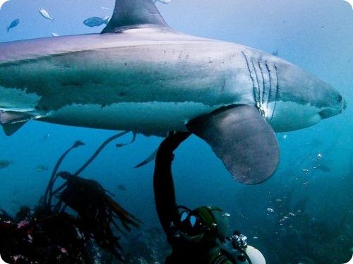 """Акулы атакуют"": развенчание мифов"