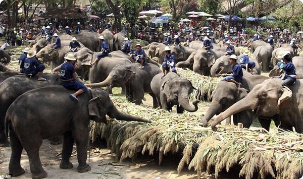 Национальный день слона в Тайнланде