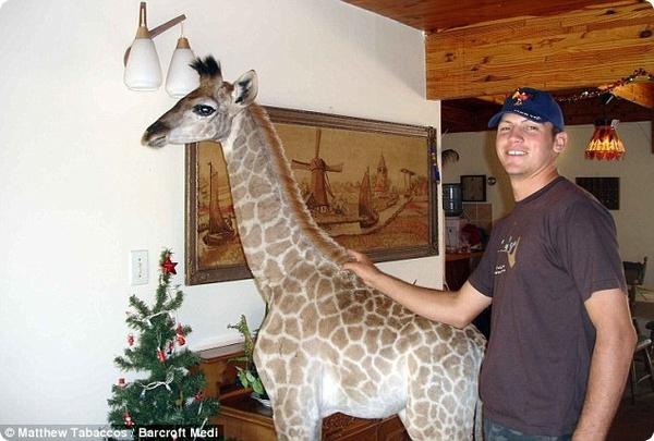 Маленькая жирафа Финни была настоящим членом семьи