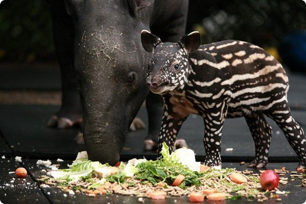 Baby Boom в зоопарке Белфаста