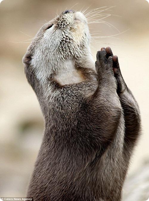 Господи, пошли мне рыбу на обед!