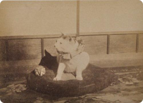 Кошка последнего сёгуна