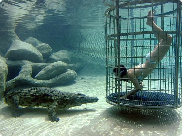 Поплавать с крокодилом