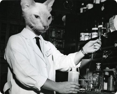 Кошачьи учёные из 60-ых