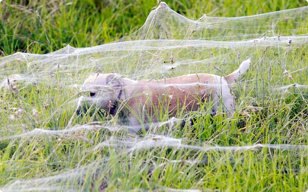 Австралийские пауки пытаются выжить…