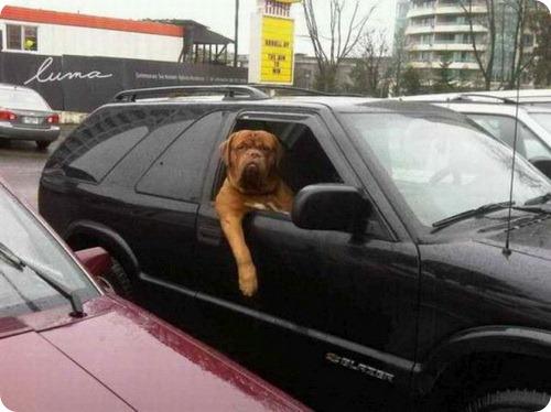 В Москве группа собак-угонщиков разбила автомобиль