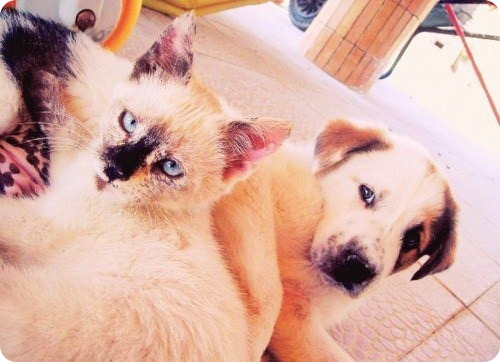Как кошка с собакой - 28