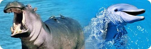 Дельфины и гиппопотамы
