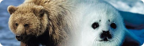 Медведи и тюлени
