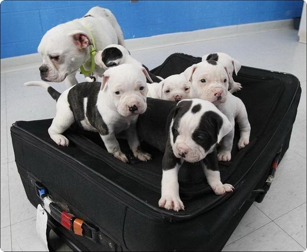 Собака спасла своих щенков от гибели