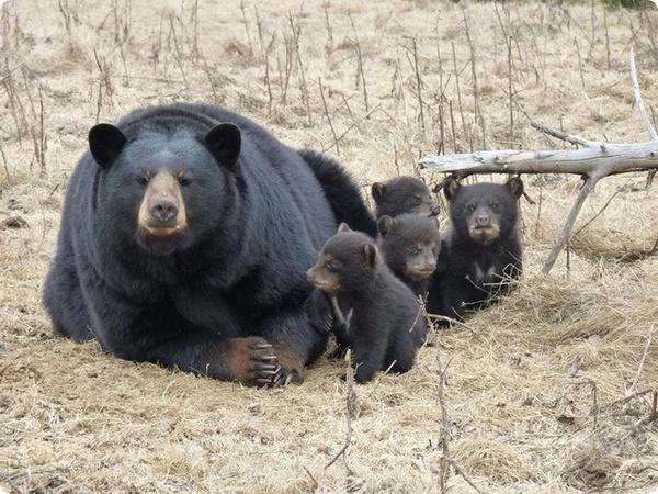 Обаятельные четверняшки из канадского зоопарка