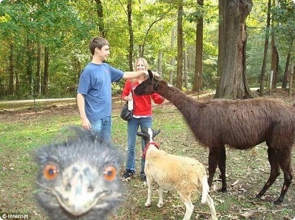 Любопытные животные в кадре
