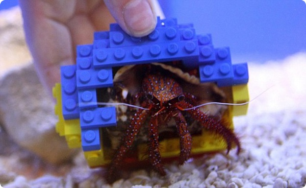 Краб Гарри и раковина из Lego!