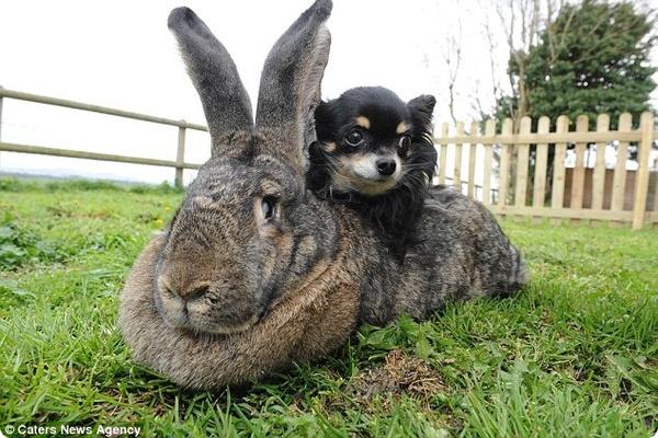Кролик Дариус повысил свой статус