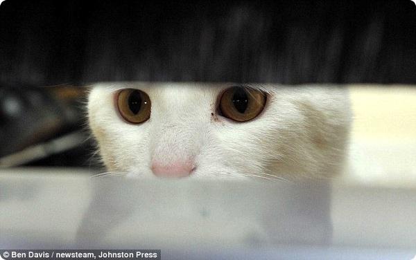 Кот Снежок отвадил от своего дома всех почтальонов