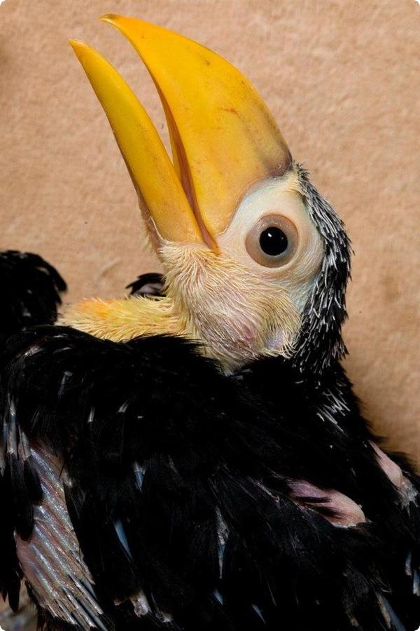 Парочка туканят из зоопарка Атланты