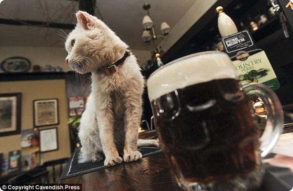 Секрет кошки-долгожительницы Рози – пиво?!