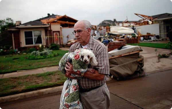 Животные после торнадо