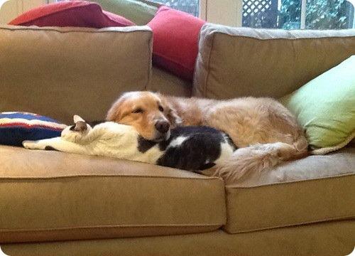 Как кошка с собакой — 29