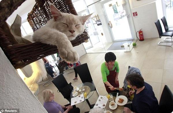 Первое кафе для кошек в Европе!