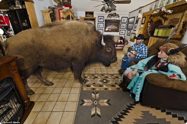 Бизоны, живущие в доме «Заклинателя буйволов»