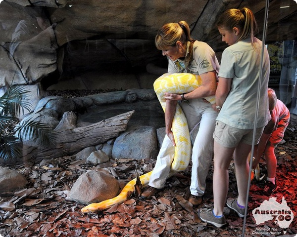 Огромный питон-альбинос и семейство Ирвинов
