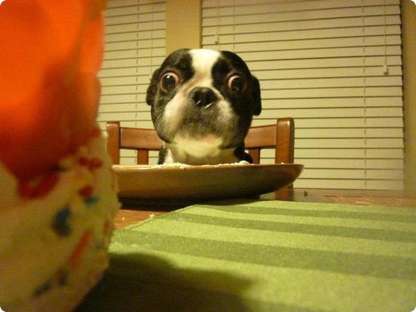 Пёс с самыми большими глазами попал в книгу рекордов Гиннесса