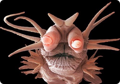Картинки по запросу Помпейский червь