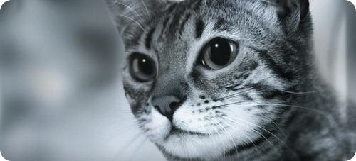 Профессиональный корм для кошек PURINA PRO PLAN