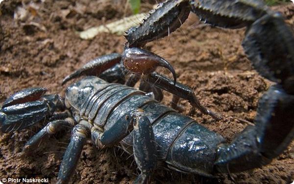 Учёными открыто несколько новых видов насекомых!