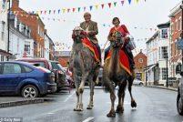 Верблюды – идеальный городской транспорт!