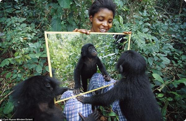 Центр по спасению шимпанзе в Конго
