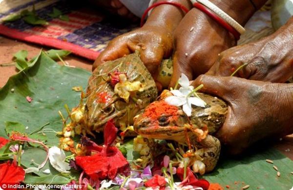 Бракосочетание лягушек в Индии!