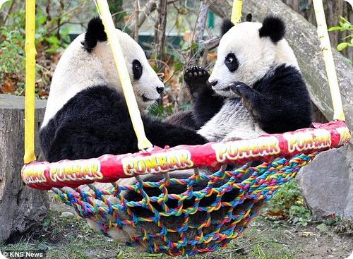 Панды на качелях
