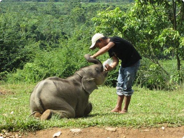История спасения маленького слонёнка по имени Бона