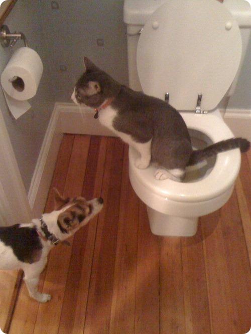 Как кошка с собакой - 30