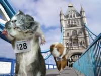 Морские свинки на олимпиаде! 2012