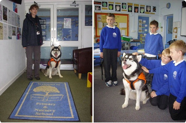 Собака работает помощником учителя