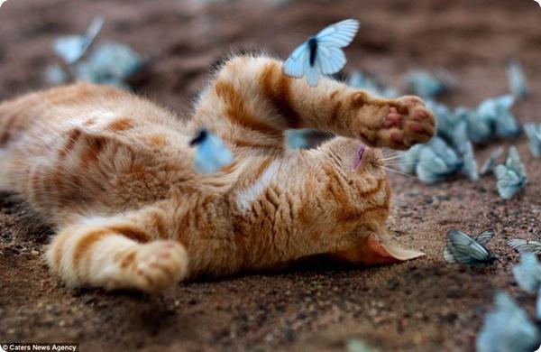 Котёнок и бабочки
