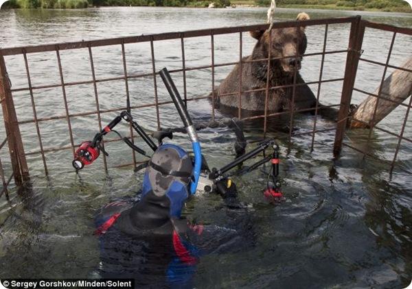 В метре от медведя!