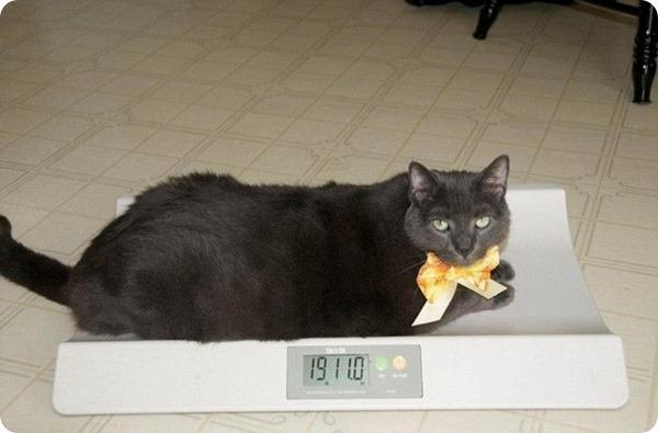 Невероятное превращение кота по кличке Крошка