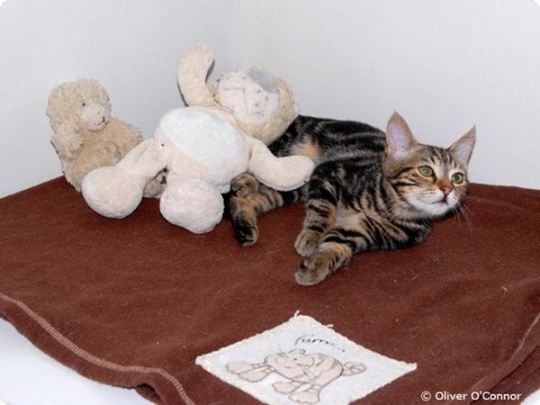 Кошка прошла из Турции в Великобританию за 9 дней